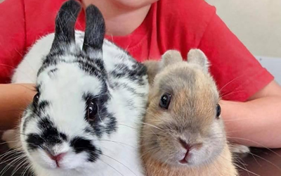 Rabbit Awareness Week in June
