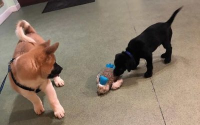 Puppy party fun
