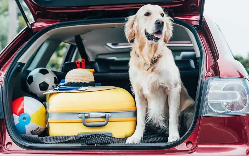dog travelling in boot of car
